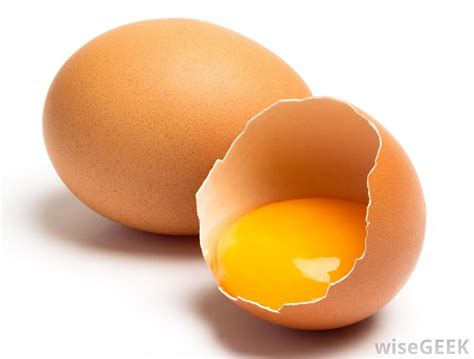 eggs bad for dogs what foods are bad for pets with pictures
