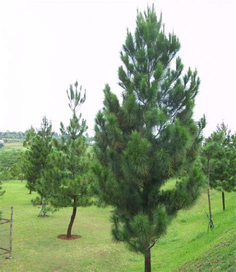 21 tanaman yang biasa ada di taman dan fungsinya