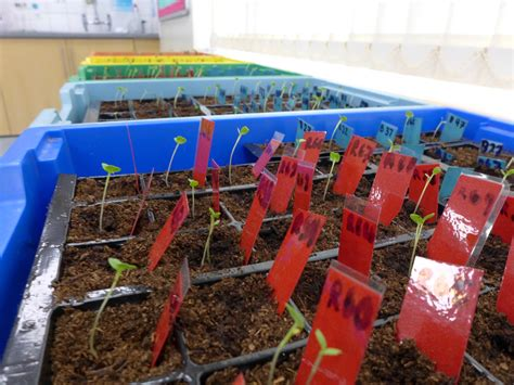tips  order plants  forgardening