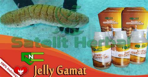 K Link Qnc Jelly Gamat cara konsumsi qnc jelly gamat obat alergi kulit alami