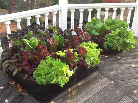 Organic Container Vegetable Gardening Diy Healthy And Organic Vegetable Container Garden The