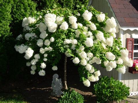 when to prune flowering shrubs a guide to northeastern gardening when to prune flowering