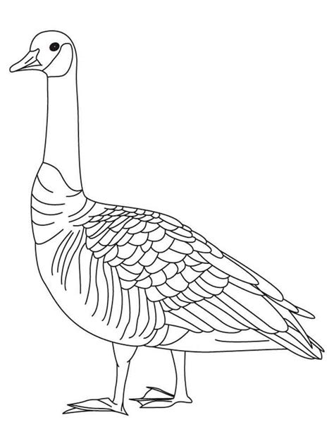 nene bird coloring page gooses birds coloring pages 7 nene bird coloring page