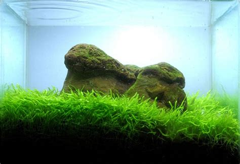 Simple Aquascaping Ideas by 403 Forbidden