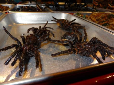 Do Spiders Eat Bed Bugs by They Eat Tarantulas In Thailand Bugs
