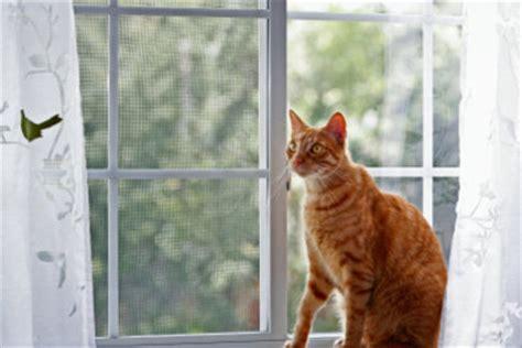 Fenstergitter Selber Machen by Fenstergitter F 252 R Katzen Selber Bauen
