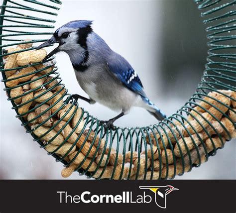 120 best bird feeding images on pinterest for the birds