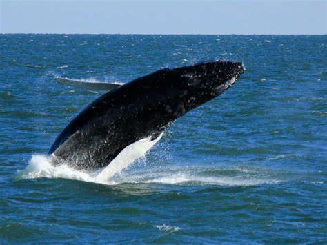 Sweepstakes Virginia Beach - whale watching at virginia beach travel channel travel channel