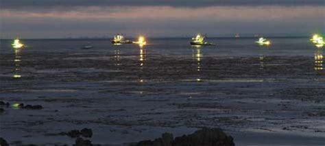 squid fishing at night from a boat edible notables spring 2012 monterey bay