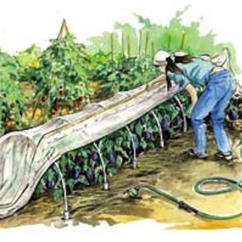 Garden Row Covers by Row Covers The No Spray Way To Protect Plants Organic