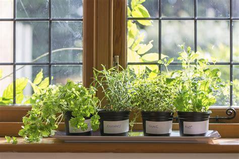 indoor kitchen garden ideas piante aromatiche da coltivare in casa non sprecare