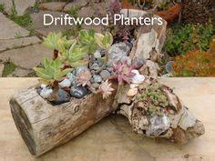 driftwood planters ideas  pinterest succulent gardening log planter  drift