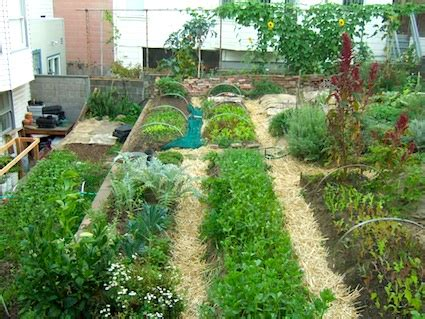 profitable backyard farming new urban ag law paves the way for growers in san