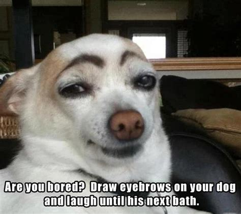 Funny Dog Face Meme - dog meme funny pictures quotes memes jokes