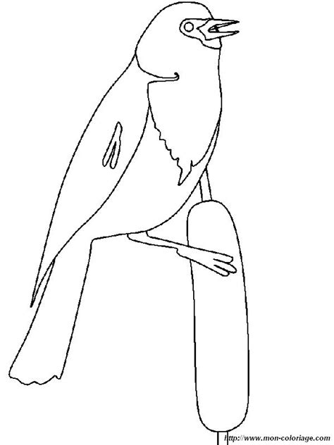 black bird coloring page coloring bird page yellow headed black bird
