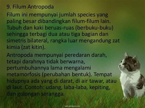 Animals Of The World Buku Tentang Hewan Dunia klasifikasi hewan dan penggolongan dunia hewan