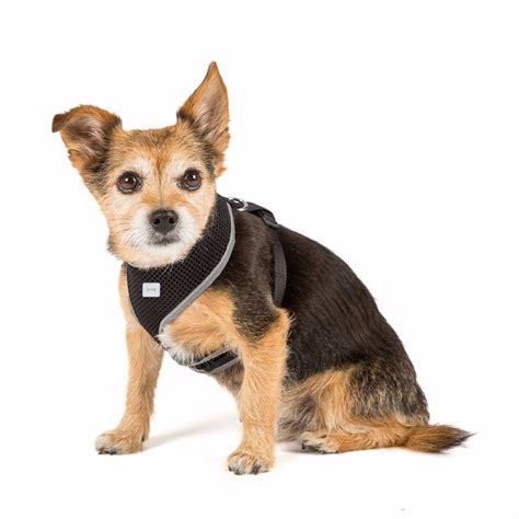 Small Home Pets Pets At Home Mesh Harness Small Black Pets At Home