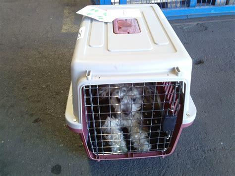 live animals air cargo douane romania