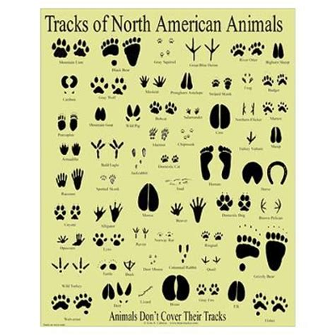 printable animal tracks identification herbivores wild animal best blog wild animal paw print