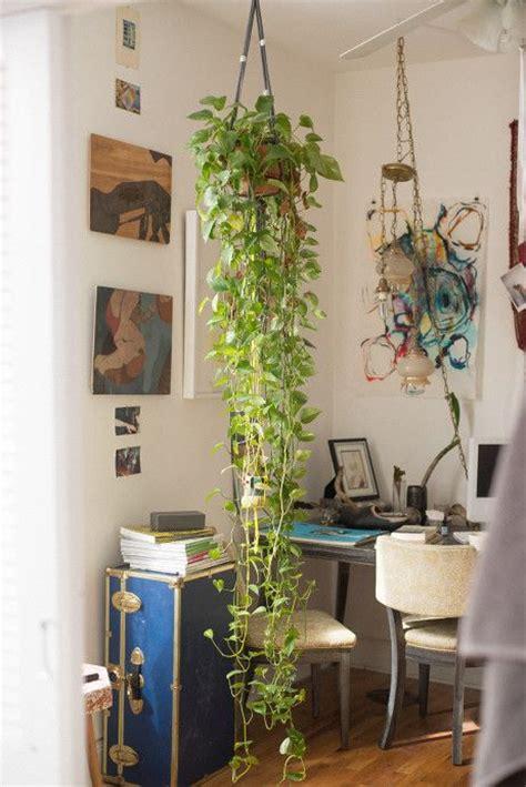 apartment plants ideas best 25 golden pothos ideas on pinterest house plants