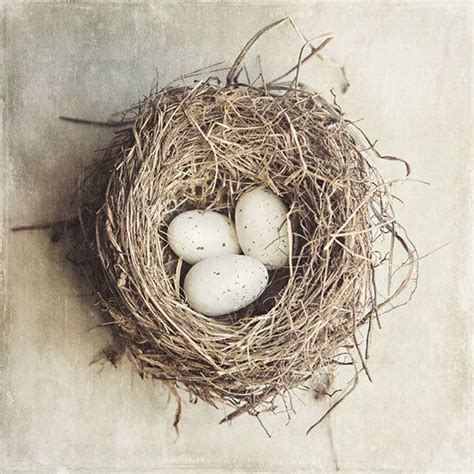 bird s nest picture beige home decor cottage decor