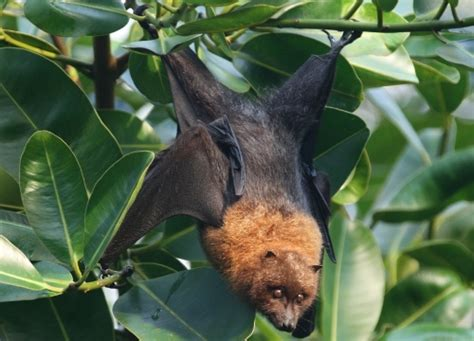 8 facts about bats fact file