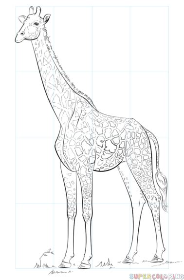 how to draw a giraffe doodle how to draw a realistic giraffe step by step drawing