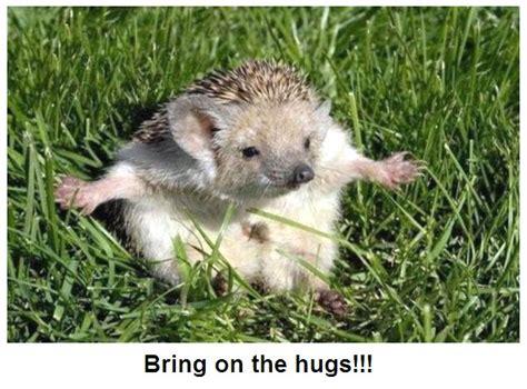 bath time for 9 week pygmy hedgehogs hedgehogs talk