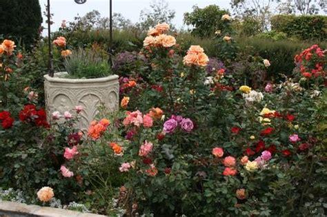 design   rose garden
