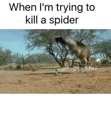 Killing Spiders Meme - when i m trying to kill a spider the grilledchez meme on