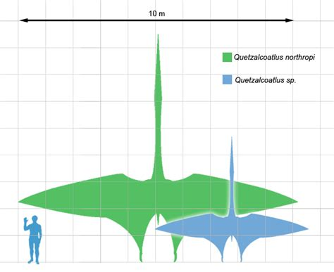 quetzalcoatlus wikipedia the free encyclopedia file quetzscale1 png wikipedia