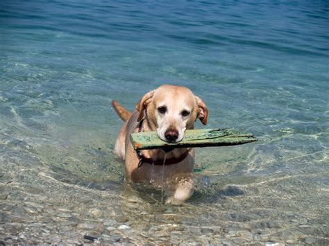 beaches that allow dogs pet friendly beaches in italy how to find a friendly accommodation