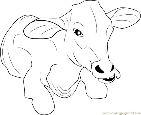 coloring pages of baby calf baby cow coloring page free cow coloring pages