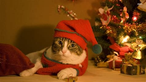 christmas wallpaper with animals christmas cat wallpapers wallpaper cave