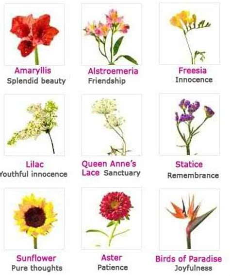 list of flowers list of flowers and their meanings with pictures