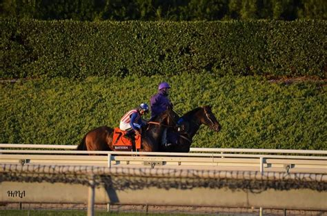 11 Classic Warming Family by A Day At The Races The Breeders Cup Classic 2014horsing