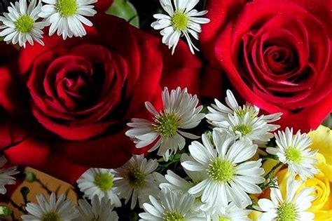 simboli dei fiori dizionario dei fiori simbologia e linguaggio dei fiori