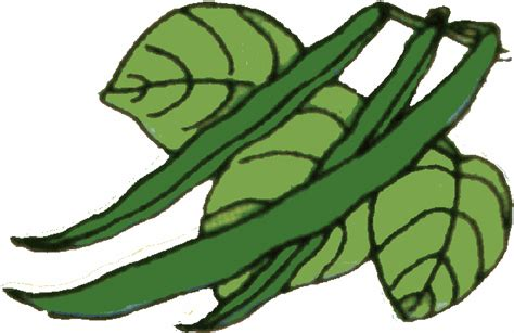 String Beans Clip - clip green beans clipart clipart suggest