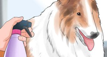 how to give a shih tzu a bath how to bathe a shih tzu puppy 15 steps with pictures wikihow