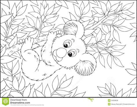 Koala Royalty Free Stock Photos   Image: 34359638