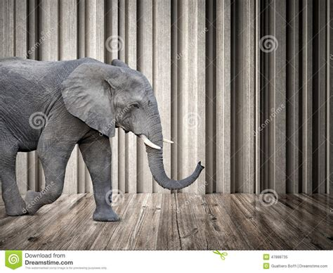 elephant room elephant in the room stock photo image 47888735