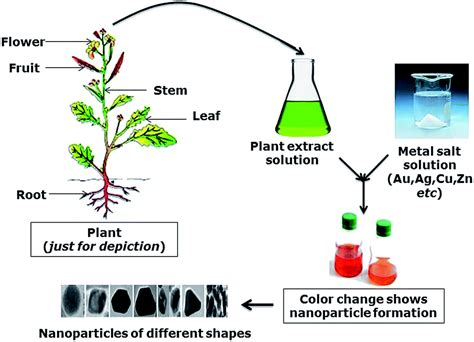 biosynthesis of nickel nanoparticles using leaf extract of phytofabricated metallic nanoparticles and their clinical