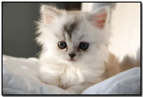 cute kitten themes for windows 7 windows 7 cat theme featuring 10 cute cat backgrounds