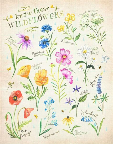 wildflower tattoo meaning 12 best images about wildflowers on gardens