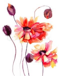 Summer Entertainment Jobs - beautiful poppy flowers watercolor painting stock photo colourbox