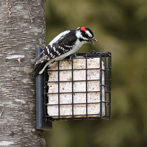 attract birds with suet duncraft s wild bird blog