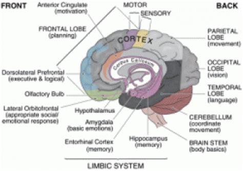 mind control language pattern pdf structure in the brain tutorvista