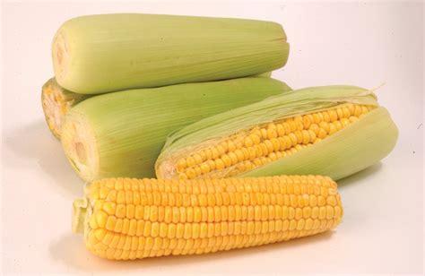 kandungan  manfaat jagung bagi kesehatan permathic blog