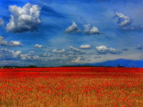 fiori ste paesaggi con fiori 28 images paesaggio con fiori