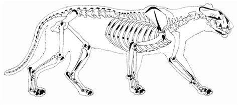 Jaguar Bones September 2013 Chasing Sabretooths